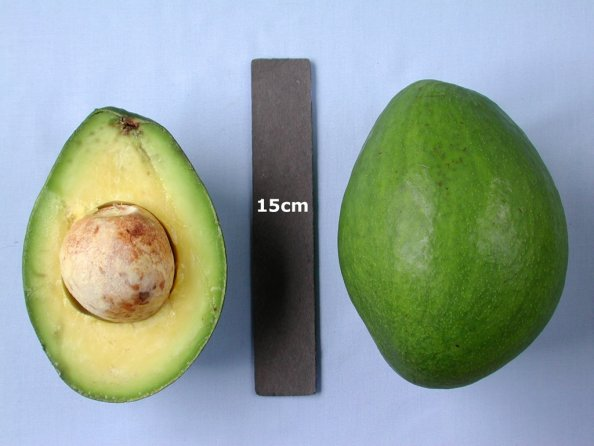Beta - Avocado